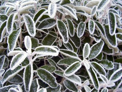 mr-frost-b